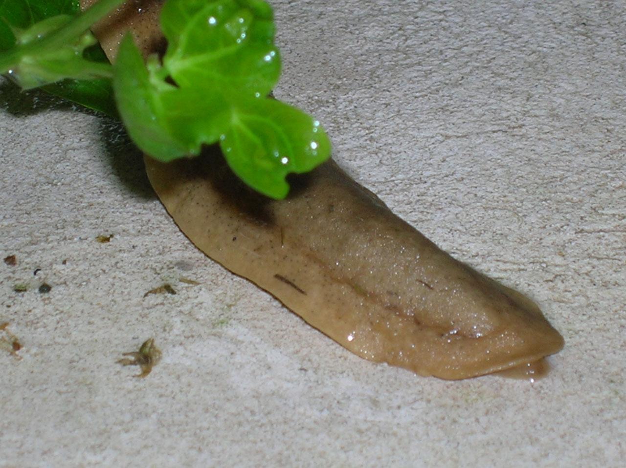 这是什么名字的动物?