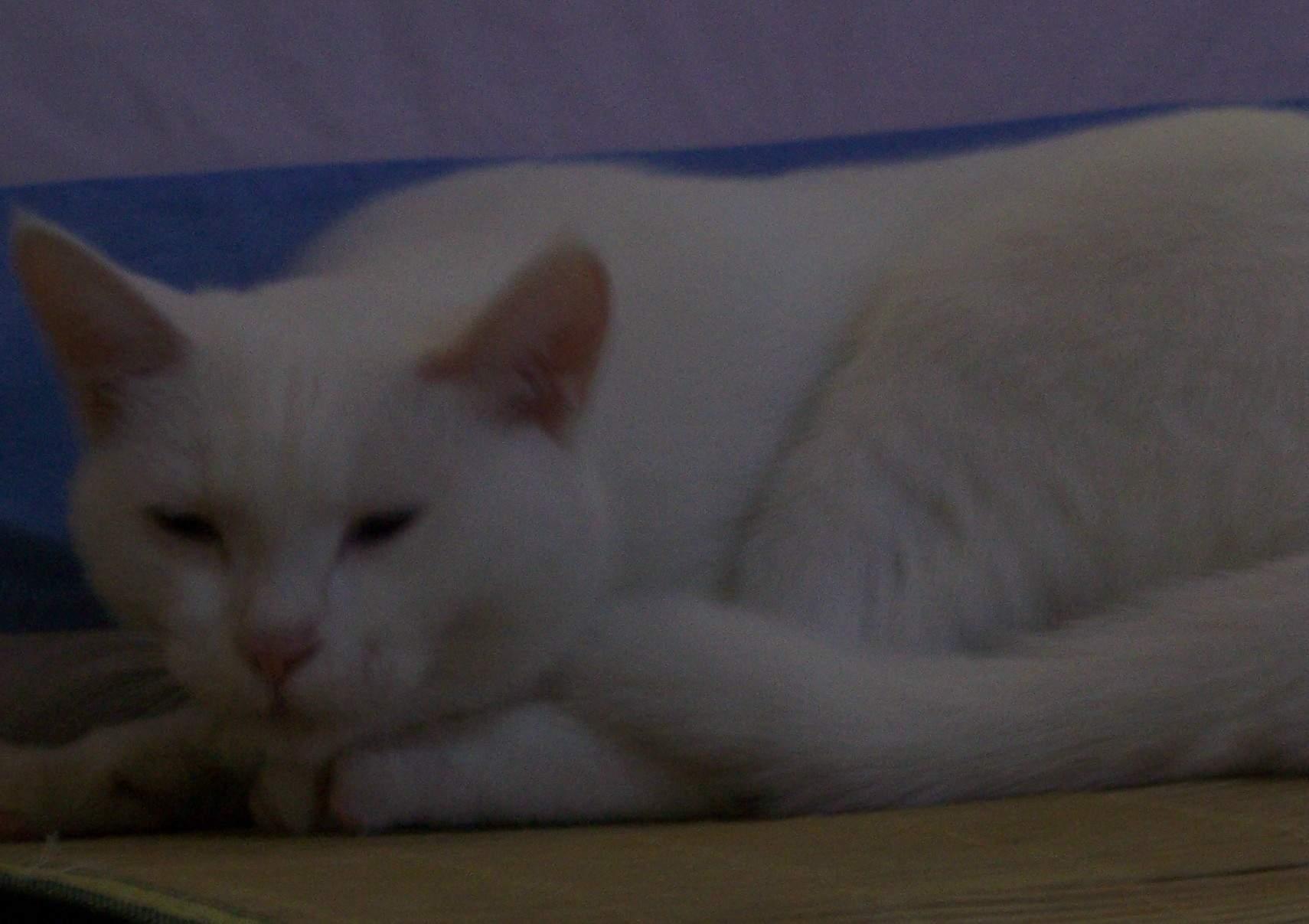 黑猫白猫,可爱活泼--请给他们一个家