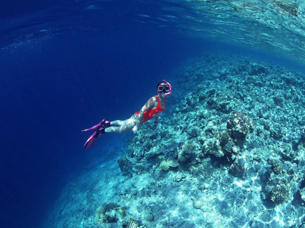 5)潜水地点初步定在大鹏半岛东涌周围海域(附近有沙滩);活动