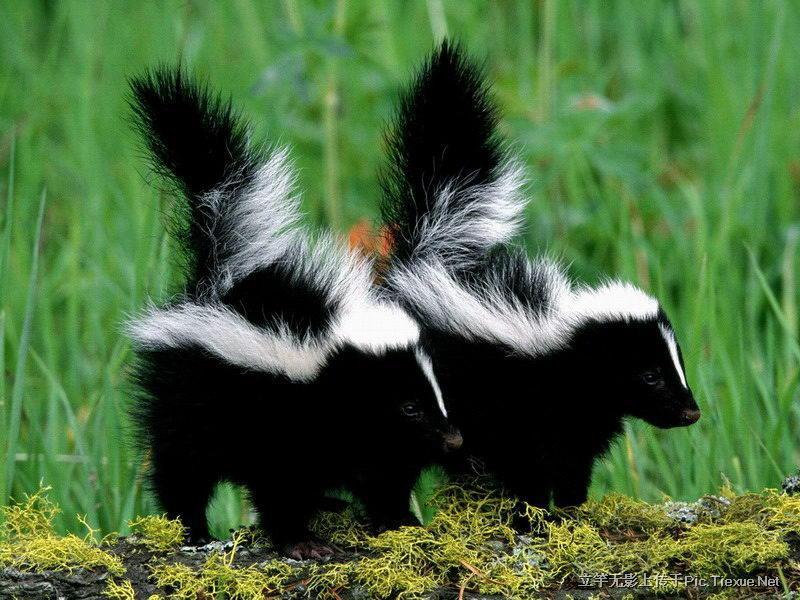 特种幼小动物宝贝照片