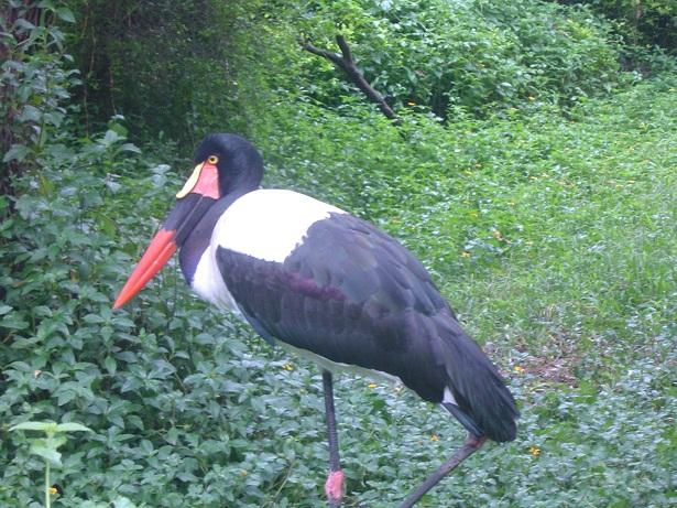 可爱的动物-广州野生动物园游