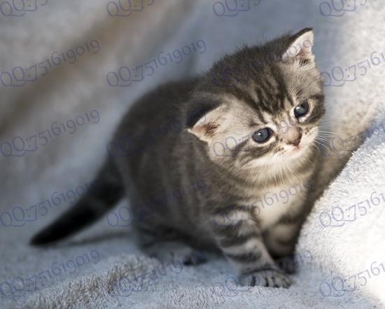 小猫咪的新照片出来了