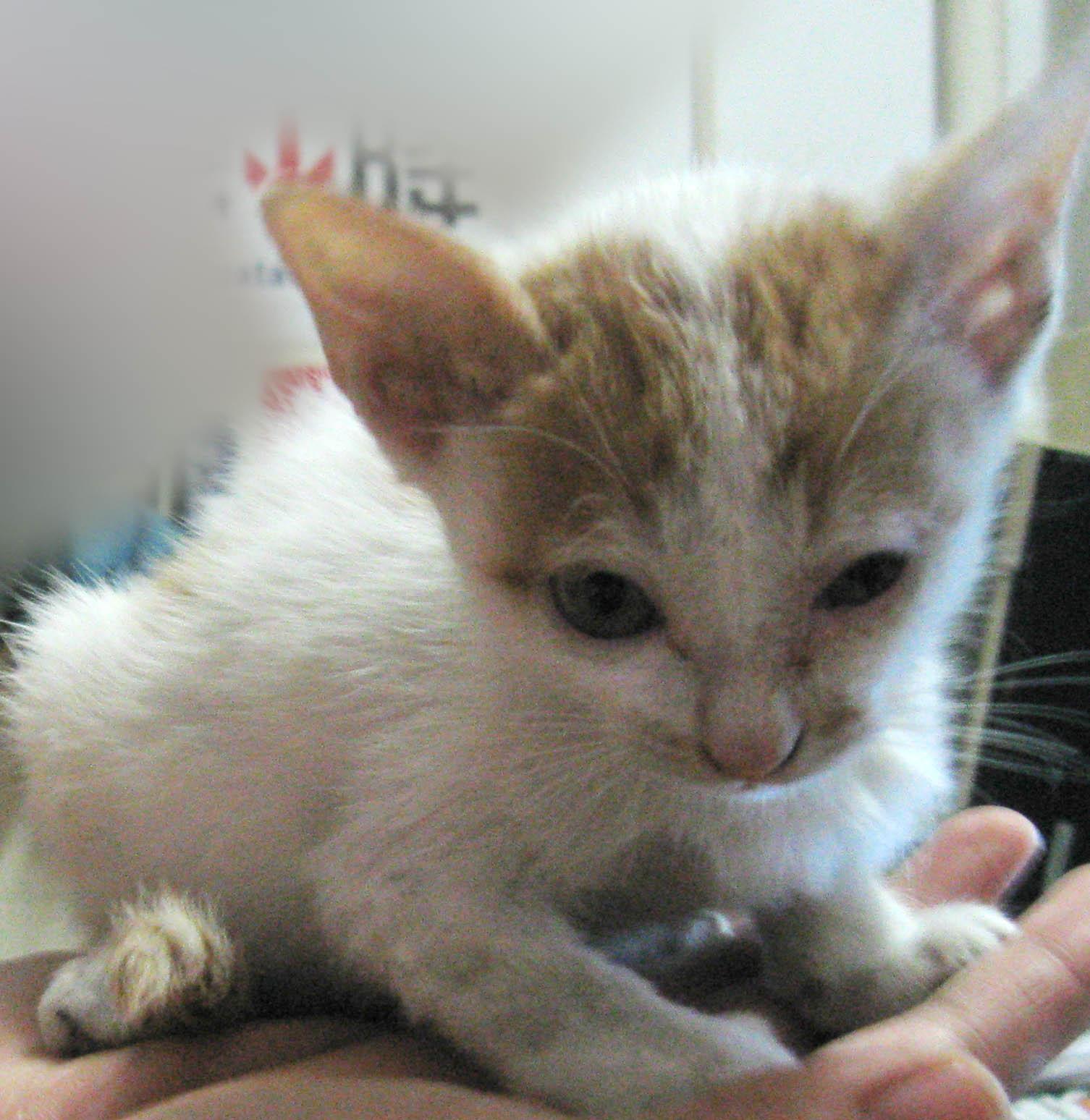壁纸 动物 猫 猫咪 小猫 桌面 1506_1548