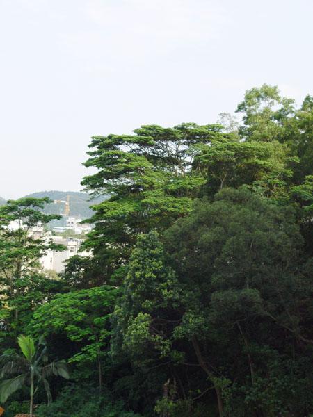 景亿凤凰谷西湖风景区最后的别墅住宅区
