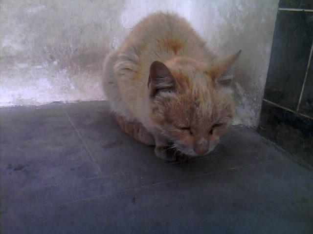 猫怀孕了 - 深圳房地产信息网论坛