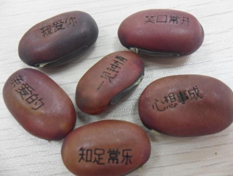 3月26号上午在南山种豆子啦! - yetongmama - 叶童妈妈(佟春凤老师)