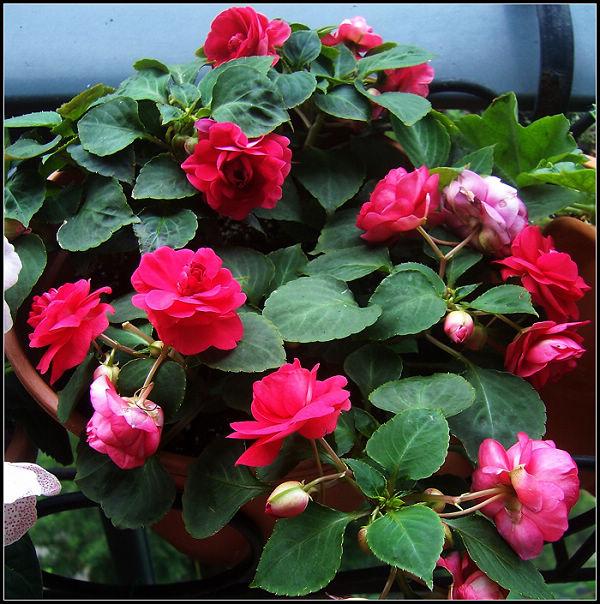 今年春天开花