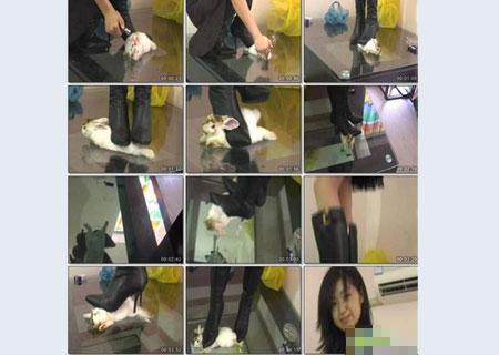 虐兔女被暴光 家人将其扭送精神病医院 深圳房地产信息网高清图片