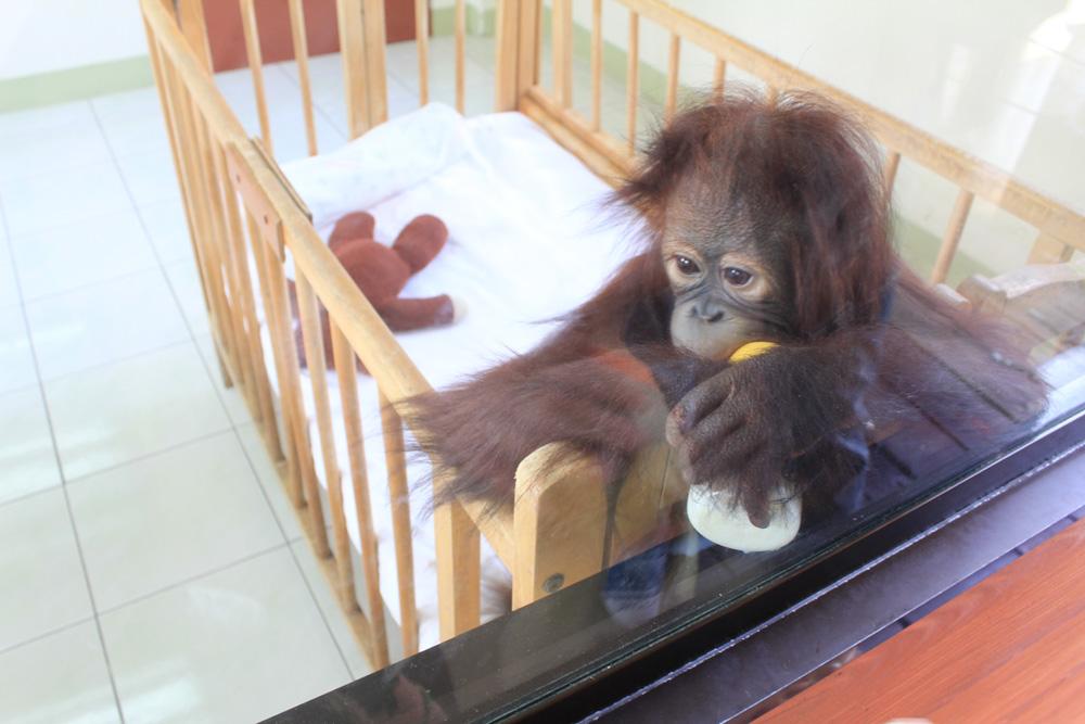 拍到的小猴子宝宝