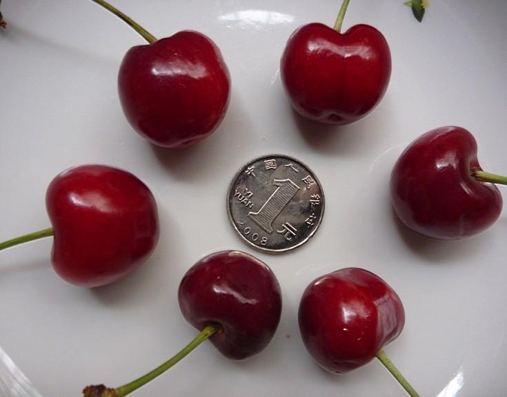 预定2011年山东樱桃产地直销 意大 食品保健