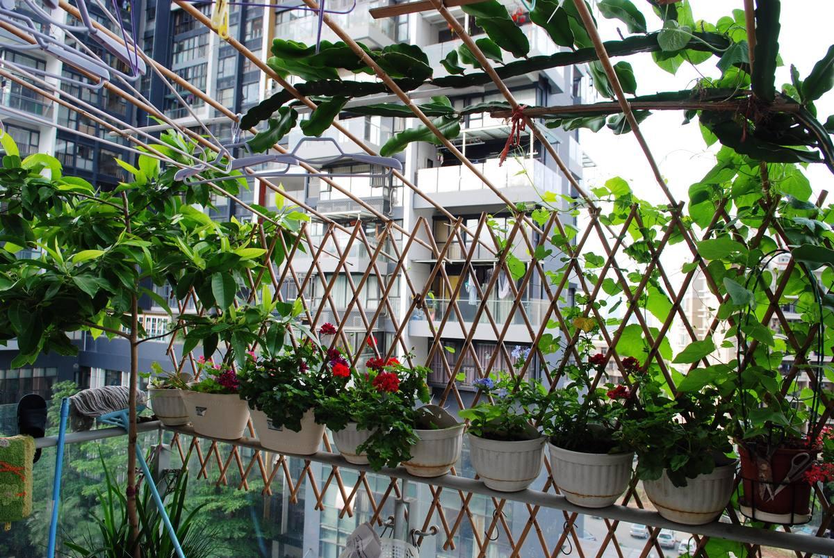 阳台种菜种花