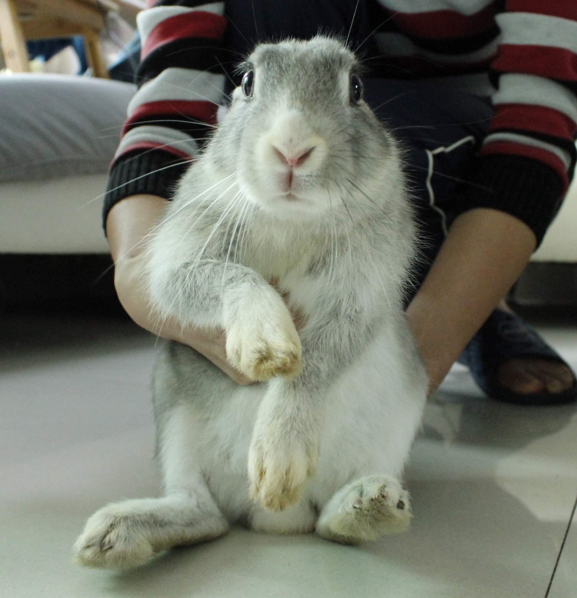 可爱小兔兔寻找新主人