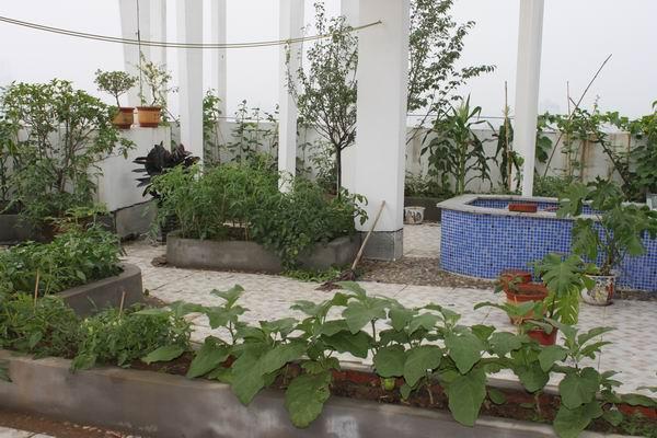 家庭屋顶菜园效果图_【楼顶菜园设计效果图_楼顶菜园设计效果图图