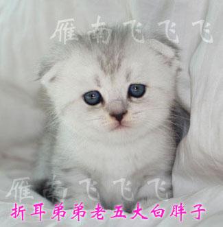 肥猫图片大全可爱