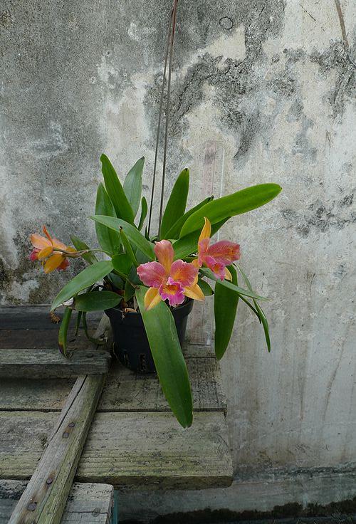 四盆兰花~~~ - 家在深圳 - 房网论坛(深圳房地产信息
