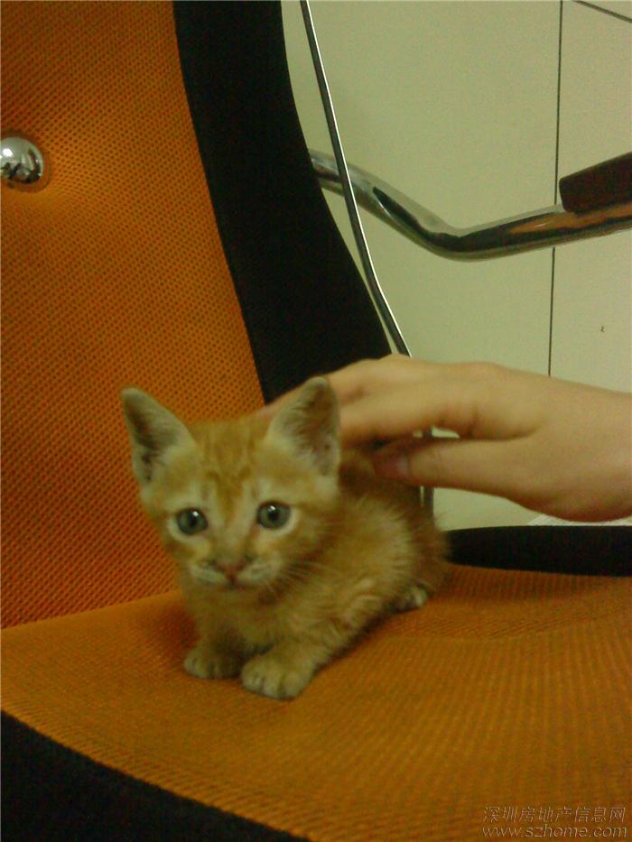 好可爱的小猫猫