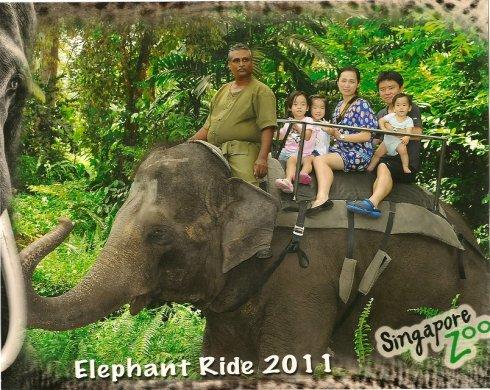 全家人在新加坡动物园骑大象