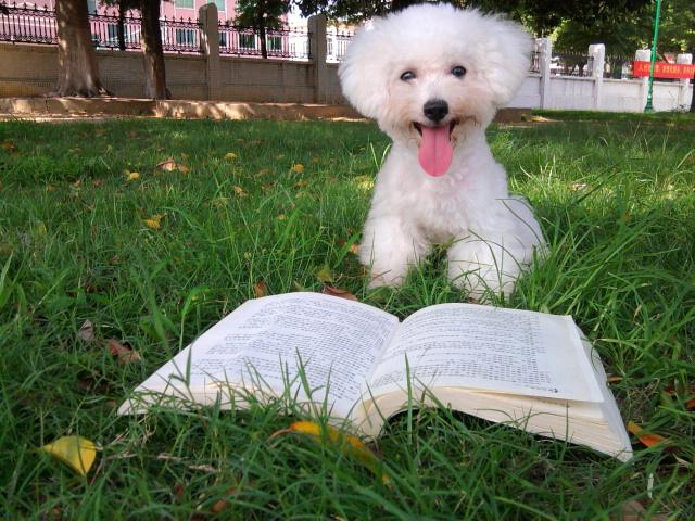 可爱的小狗狗 - 深圳房地产信息网论坛