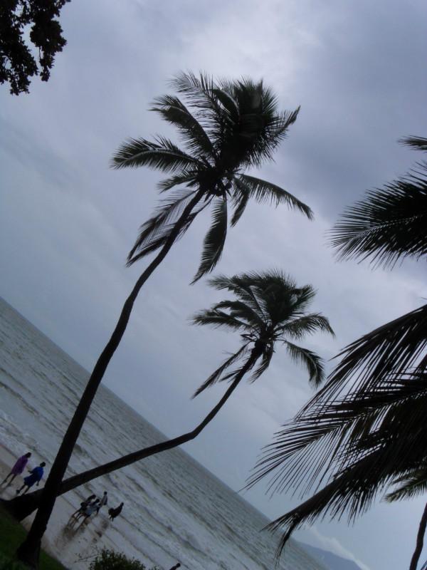 两棵椰子树风景