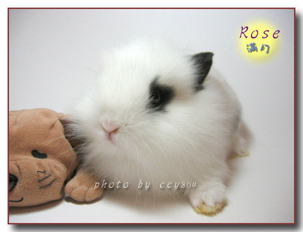猫兔洗澡 兔兔拉稀了怎么办 第一次养兔兔,大家多交流
