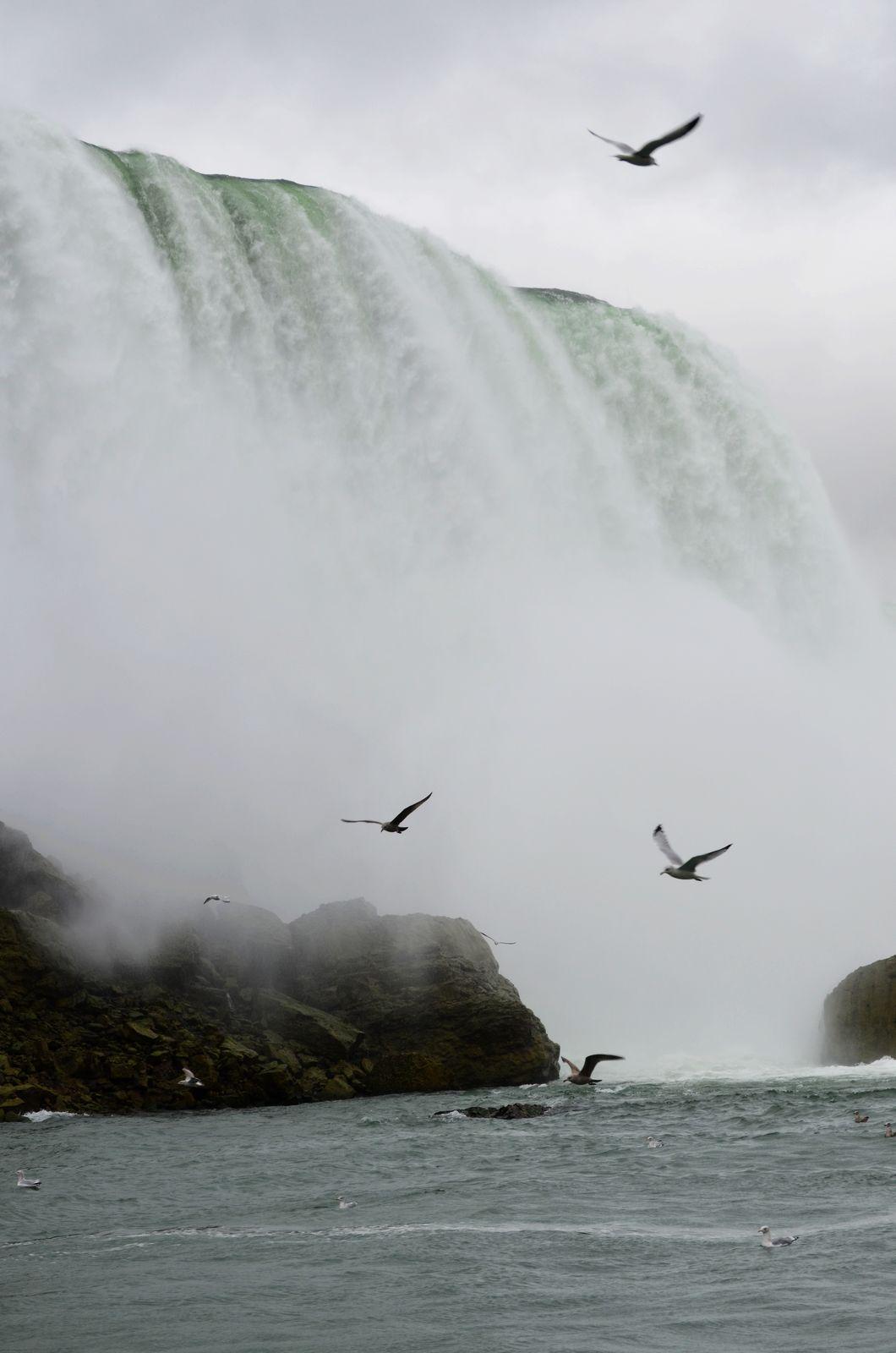 海鸥与瀑布的映衬,是否形成一张自然山水画