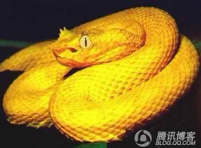 蛇的品种 - 深圳房地产信息网论坛