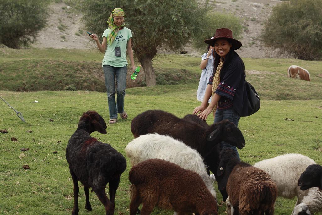 片了.可爱的羊群